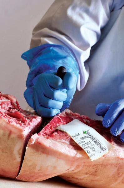 Le départ : la cuisse du porc devient un jambon